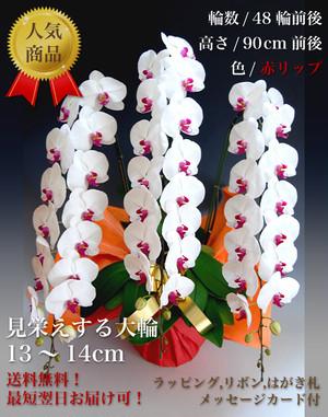 大輪胡蝶蘭 3本立ち プラチナクラス 赤リップ