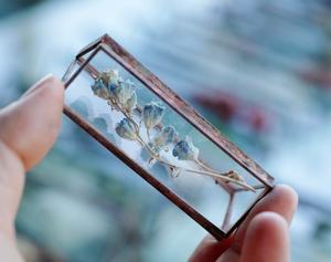 植物標本:ドライフラワー『デルフィニウム』