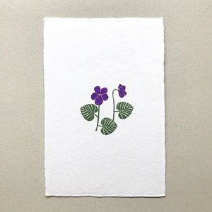 postcard (purple viola)