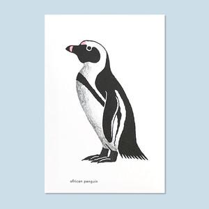 ケープペンギンのポストカード