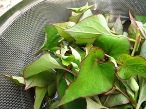 ドクダミ茶(無農薬・無化学肥料)5g×5パック