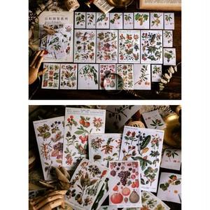 ステッカー 百科事典シリーズ 全8種 大量 イラスト シール レトロ 植物 蝶 きのこ 宇宙 果実 野鳥D13