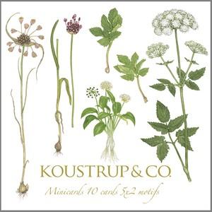 グリーティングカード 5種 封筒付き KOUSTRUP & CO. - Wild plants 北欧の野生植物