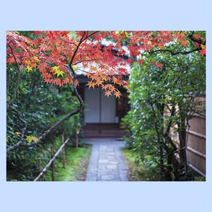 紅葉の庭先