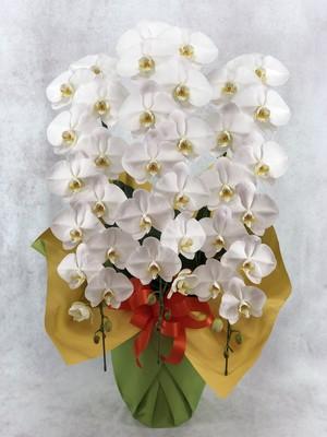 【11】特選品 大輪白3本立(送料・ラッピング無料)    K01