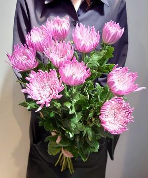 9月9日は『重陽の節句』長寿を願って 菊を飾ろう。 アナスタシアピンク 送料無料