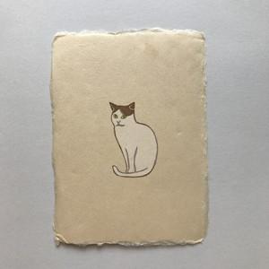 postcard (cat)