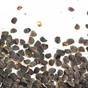 野生ラッキョウの種100粒