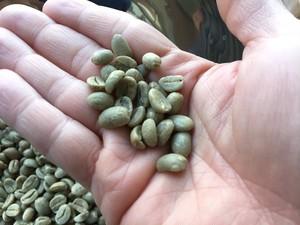 【カビなしコーヒー豆】ペルーカハマルカ中深煎160g