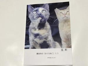 【送料無料】フォトブック(ソフトタイプ)