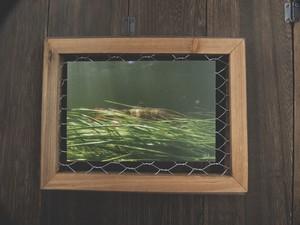 Postcard〔Water Grass〕