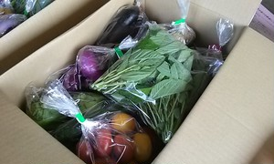 (For Hong Kong)Seasonal vegetable set  (Every Tuesday shipping)