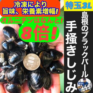 ★冷凍★ PREMIUM 松江産 やまとしじみ 特玉3L 1㎏