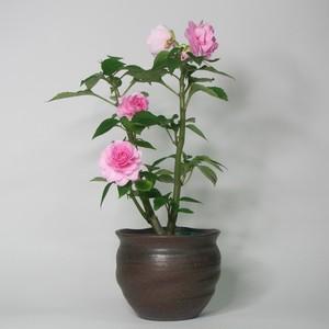 ミニ鉢カバー 陶器(信楽焼)製【SO-9515】