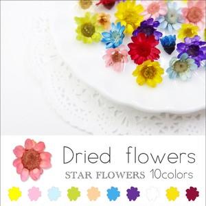ハンドメイド スターフラワー ガラスドームに【生花を使用したドライフラワー10色】約10個入り