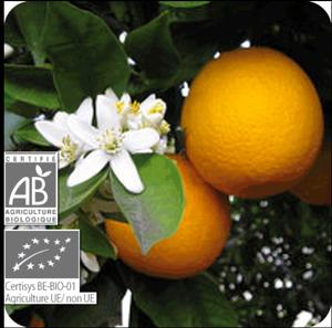 オレンジスイート10ml (プラナロム)