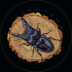 【雑貨】缶バッジ:パラワンオオヒラタクワガタ (Dorcus titanus palawanicus)