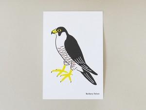 鳥のポストカード