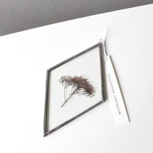ユウギリソウ / A piece of nature 菱形 大
