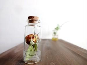 植物標本 Botanical Collection■No.R-8 ミニバラ セカンドラブ