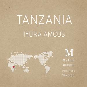 【250g】タンザニア/イユラ精製所/ウォッシュド