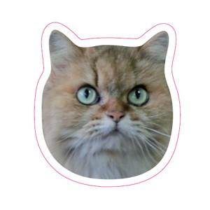 猫マグネット【クリスタル】 Face Magnet [Crystal]