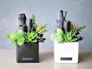 【送料無料】偶然が生むアート、多肉植物と竹炭の「グリーン・カルテット」(2色セット)