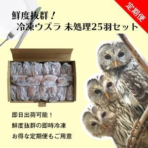 【定期便】豊橋産 冷凍ウズラ 未処理 25羽1ケース 親ウズラ 猛禽類・爬虫類の餌に