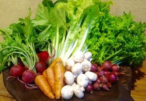 おすすめ野菜ぼっくす(加工食品も含む)