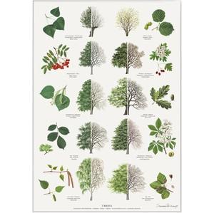 アート ポスター A4 サイズ KOUSTRUP & CO. - Trees in summer & winter 夏と冬の木