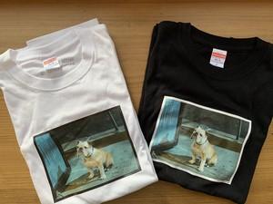 パターソンTシャツ