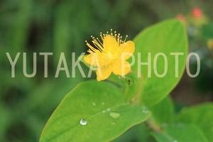 写真(黄色い花)
