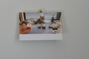 ポストカード 猫