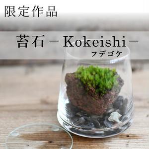 【現物販売】着生苔石フデゴケ 20.08.2#1◆栽培容器付