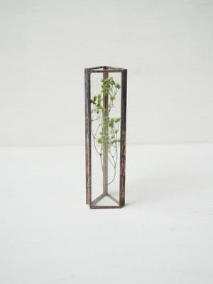 HACOMIDORI 植物標本 かすみ草 green(小)