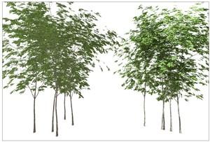 Vectorworks 樹木 寄せ植え 5本