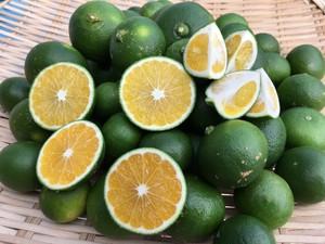 完全無農薬摘果ミカン(温州ミカン)1kg30〜40個