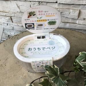 スプラウト栽培専用容器