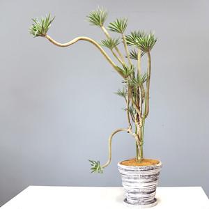 テナガサル植物