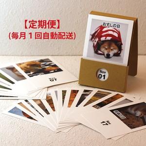 【通常便よりお得】柴犬まる日めくりカレンダー【定期便】