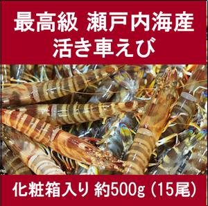 生名車えび (特選)約500g(15尾)