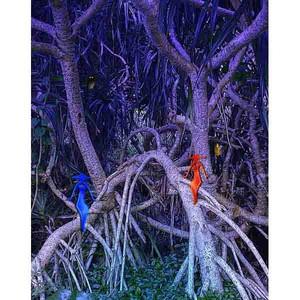デジタルアート 神秘の森・31(静寂04)