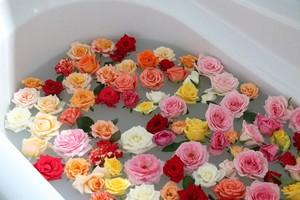 (5月28日以降出荷分・追加販売):【送料込み】豪華バラ風呂用のバラ50輪