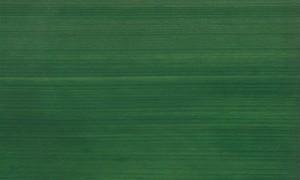 桧ツキ板 柾目 0.6mm厚 30*15cm 染色緑