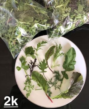 ベビーリーフ2kg (Baby Leaf 2kg)