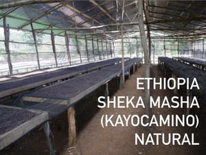 『300g』 Ethiopia Sheka Masha (Kayocamino) Natural 深煎り