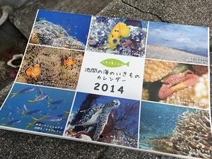 池間の海のいきものカレンダー2014(バックナンバー)
