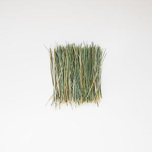 【薬草】国内有機栽培スウィートグラス 5g