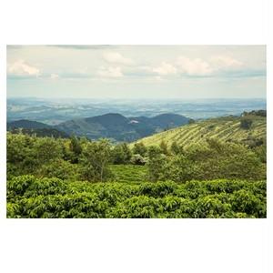 ブラジル (Brazil)・ アルトアレグレ (Alto Alegre) ・ パルプドナチュラル (Pulped Natural) 中煎り 200g