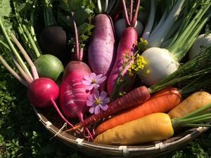 (11月〜3月用)野菜ソムリエのおすすめ旬野菜セット